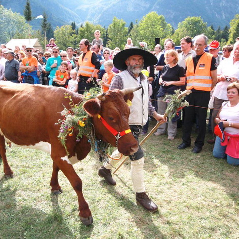 Tradicionalne prireditve